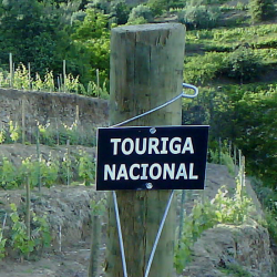 The Portuguese Treasure - Touriga Nacional