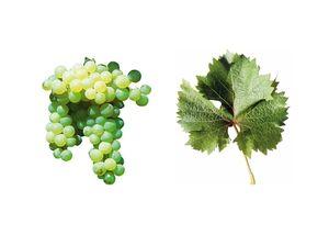 wineclick-moscatel galego branco