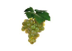 wineclick-sauvignon-blanc