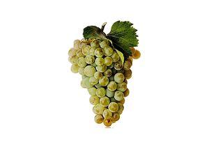 wineclick-vignoir