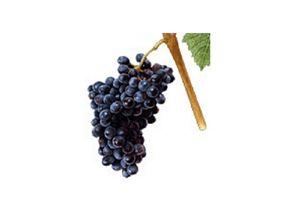wineclick-petit-verdot
