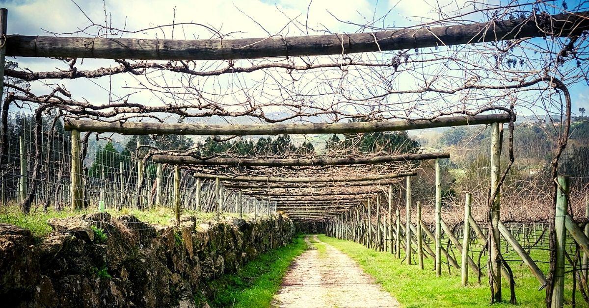Chapeleiro Wines